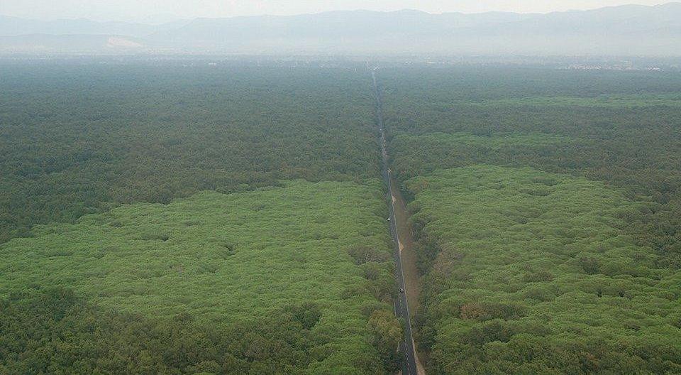 La foresta del Parco Nazionale del Circeo - foto del Corpo Forestale dello Stato
